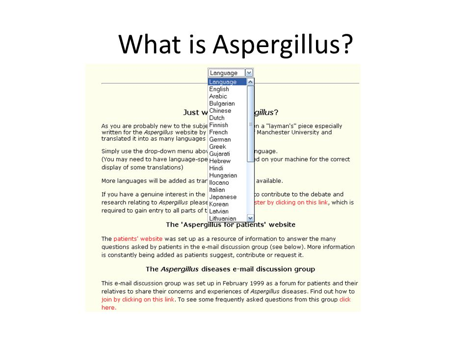 What is Aspergillus