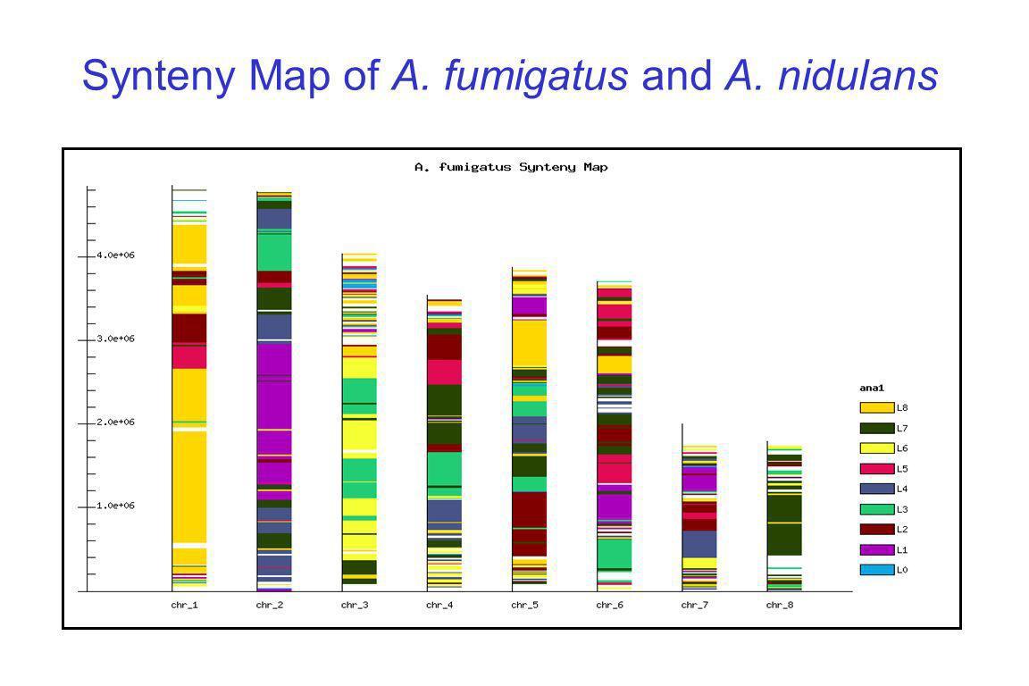 Synteny Map of A. fumigatus and A. nidulans
