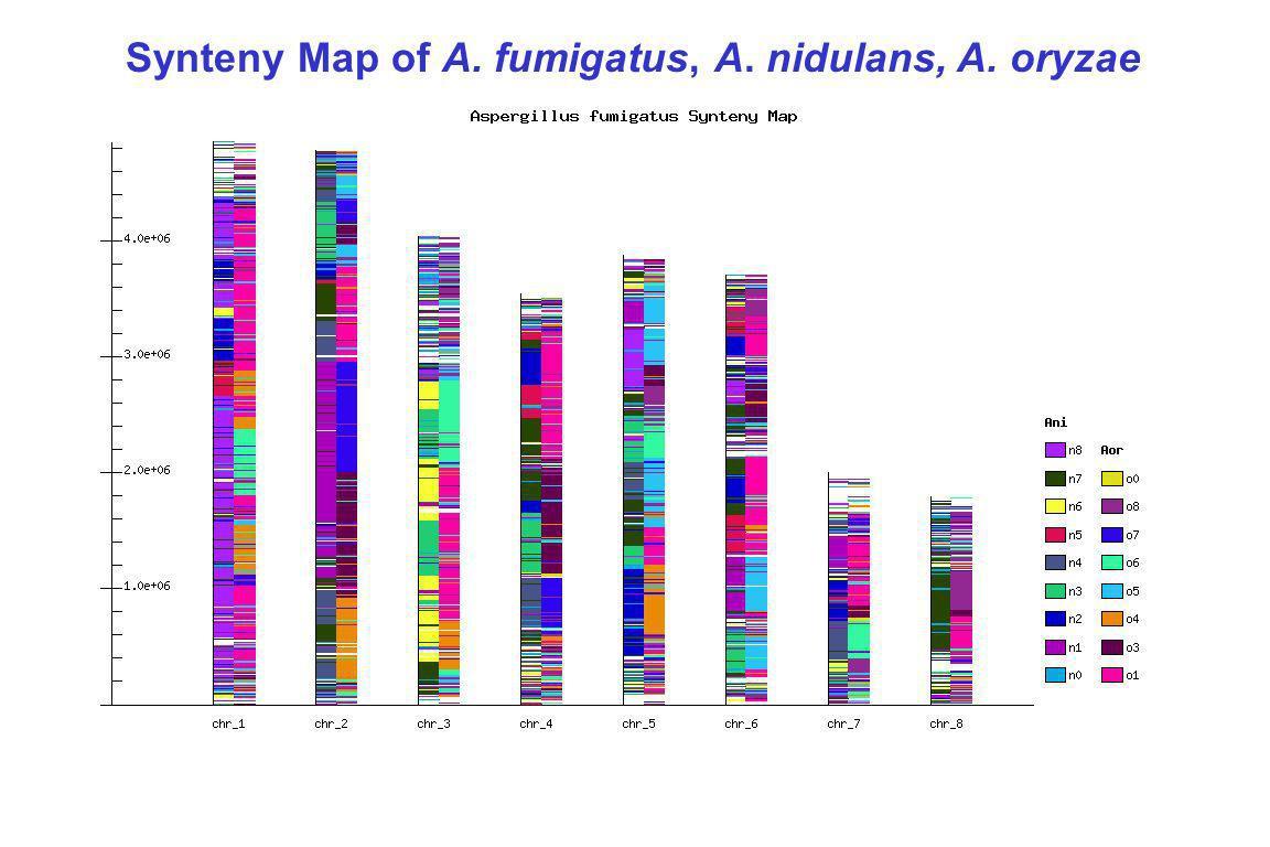 Synteny Map of A. fumigatus, A. nidulans, A. oryzae