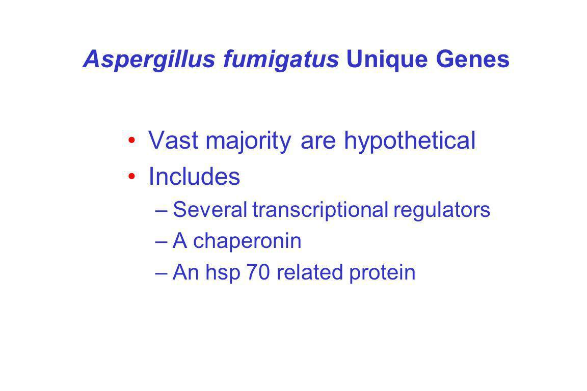 Aspergillus fumigatus Unique Genes Vast majority are hypothetical Includes –Several transcriptional regulators –A chaperonin –An hsp 70 related protein
