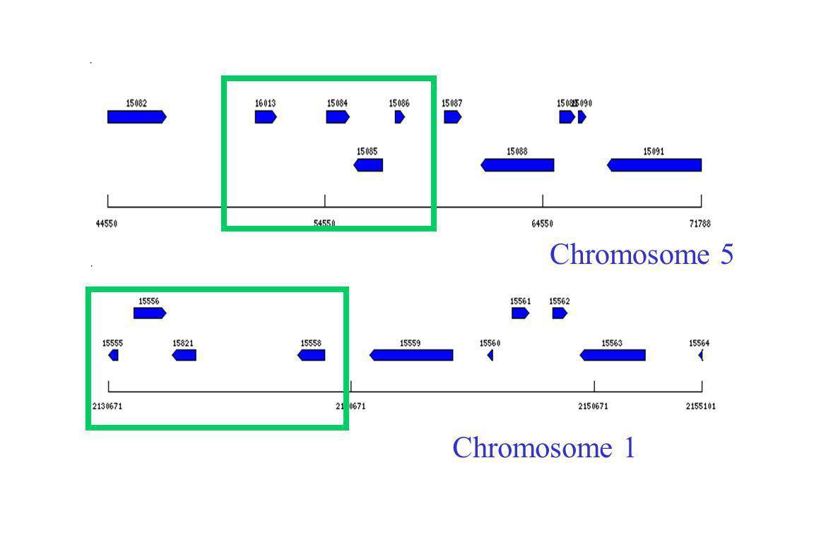 Chromosome 1 Chromosome 5