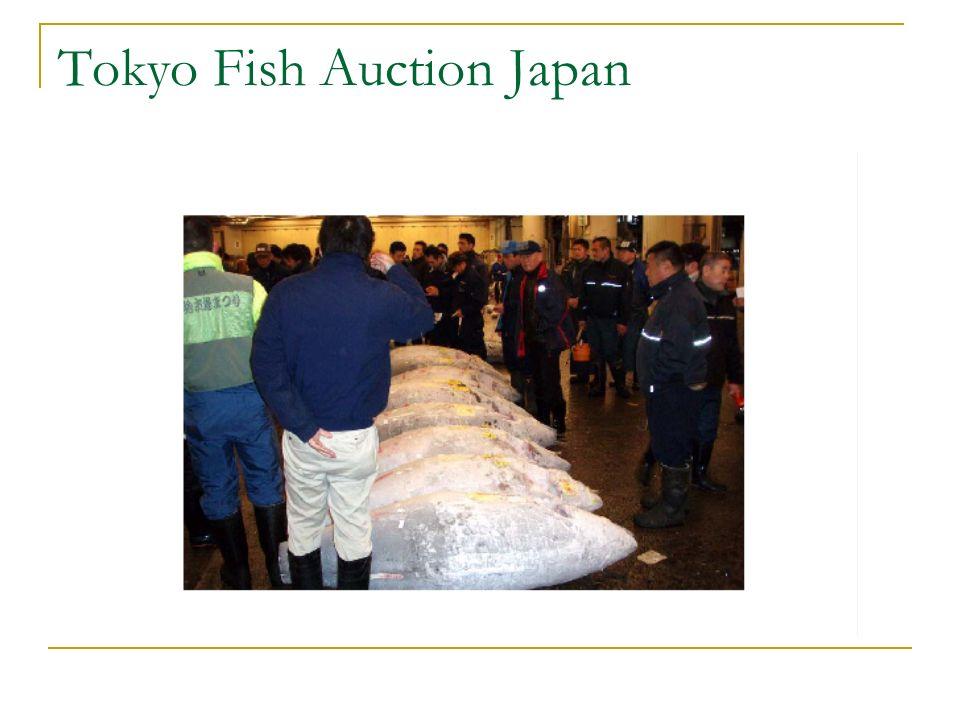 Tokyo Fish Auction Japan