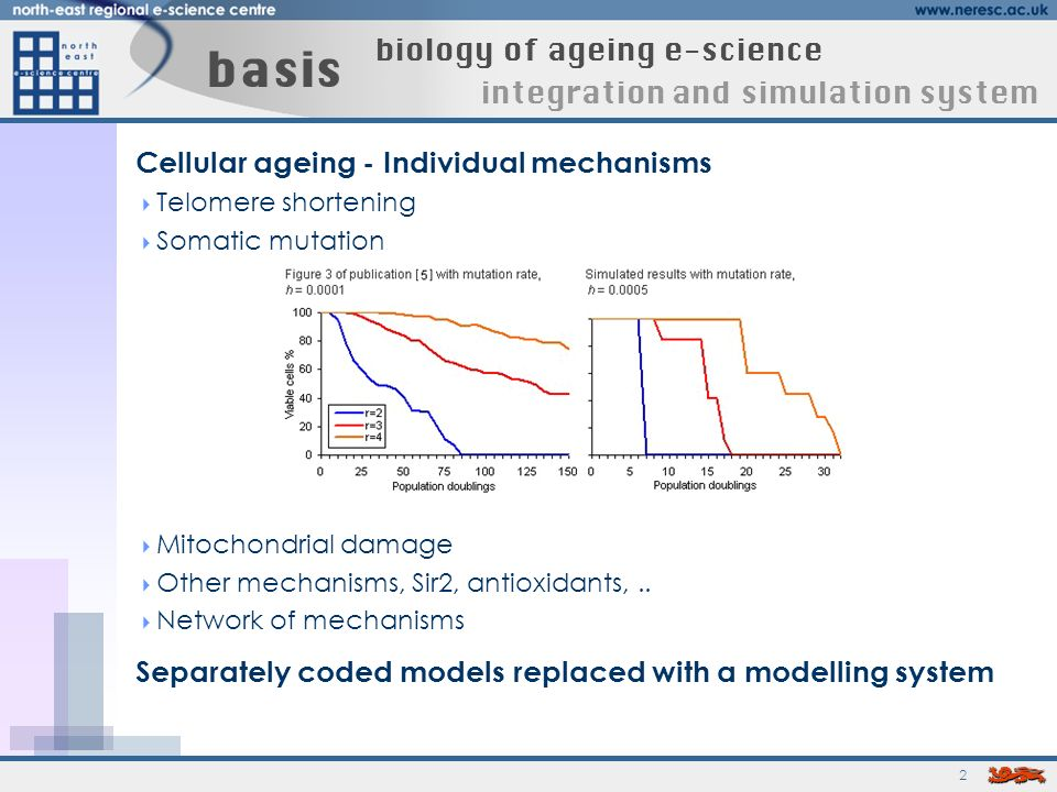 2 basis biology of ageing e-science integration and simulation system Cellular ageing - Individual mechanisms Telomere shortening Somatic mutation Mitochondrial damage Other mechanisms, Sir2, antioxidants,..