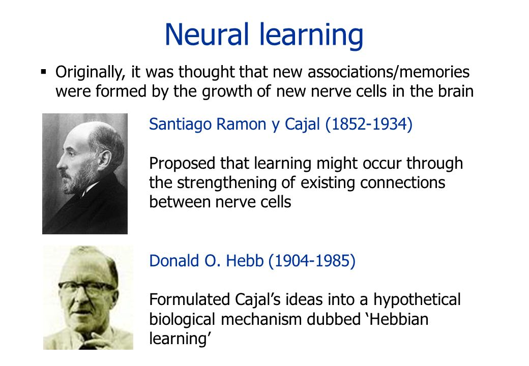 Neural learning Originally, it was thought that new associations/memories were formed by the growth of new nerve cells in the brain Santiago Ramon y C