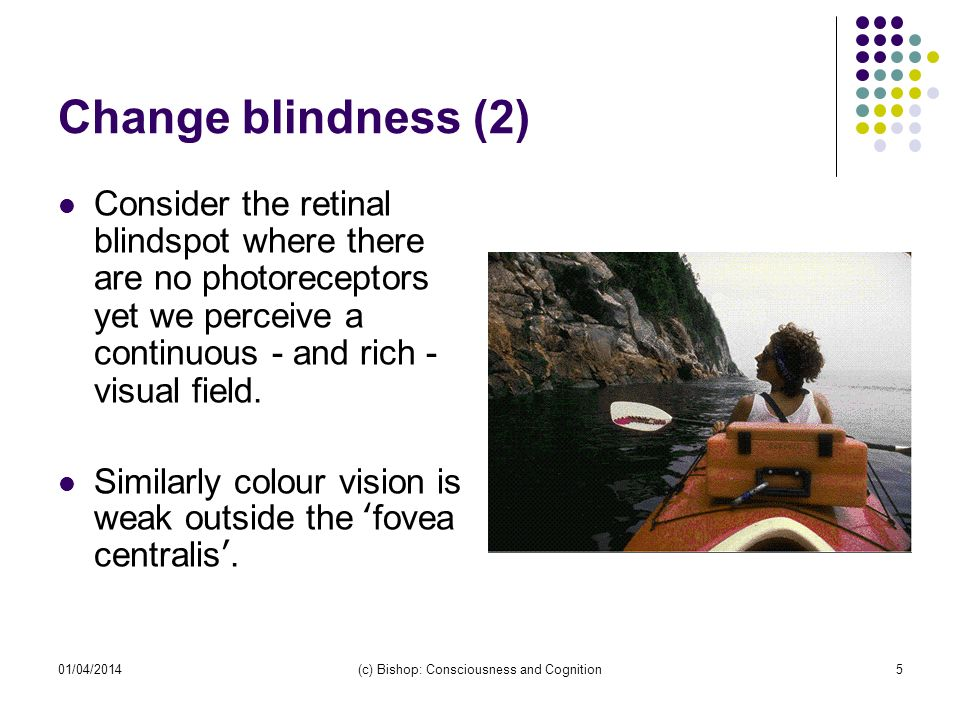 01/04/2014(c) Bishop: Consciousness and Cognition5 Change blindness (2) Consider the retinal blindspot where there are no photoreceptors yet we perceive a continuous - and rich - visual field.
