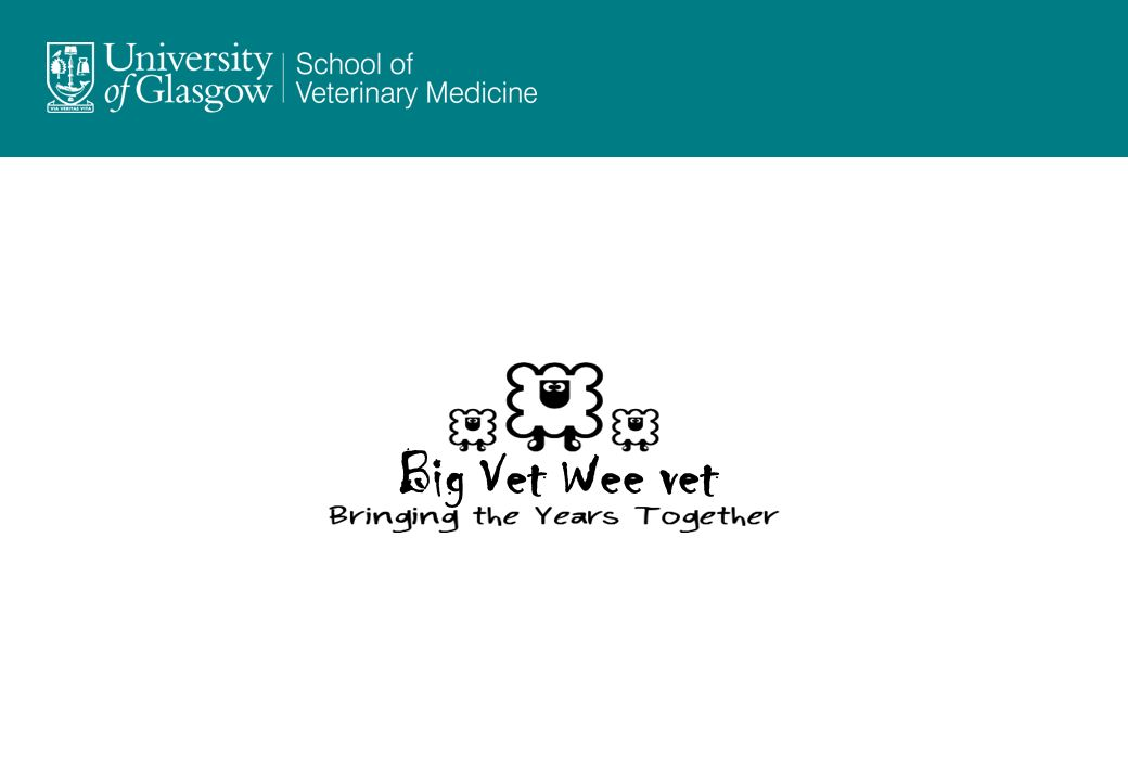 Big Vet Wee vet