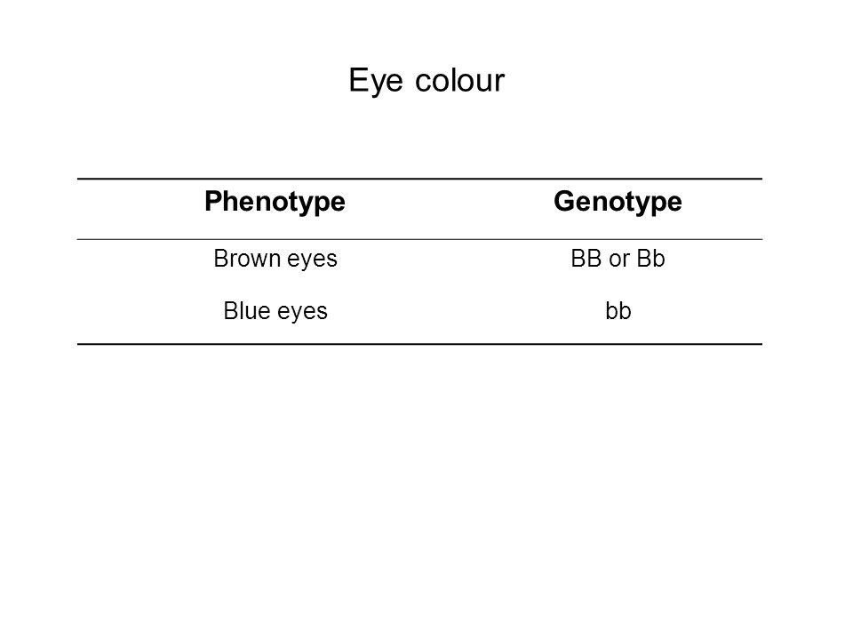 Eye colour PhenotypeGenotype Brown eyesBB or Bb Blue eyesbb