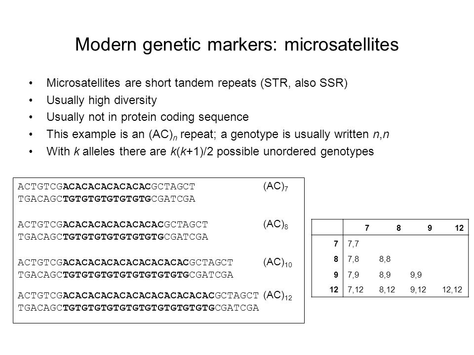 Modern genetic markers: microsatellites Microsatellites are short tandem repeats (STR, also SSR) Usually high diversity Usually not in protein coding