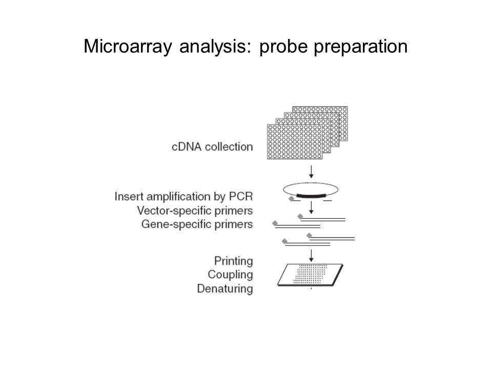 Microarray analysis: probe preparation