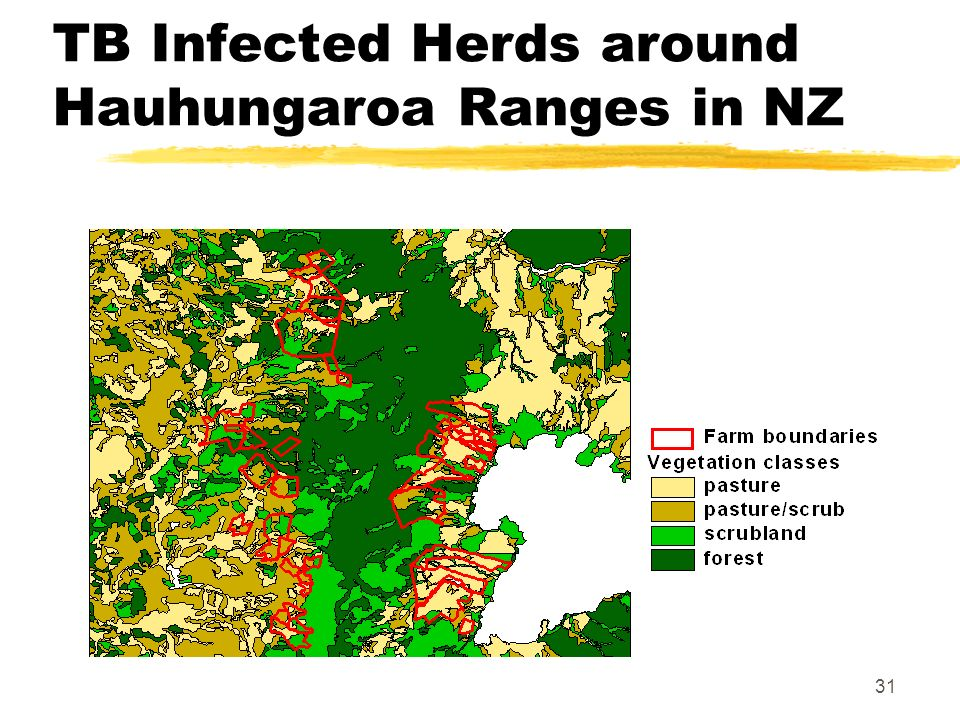 31 TB Infected Herds around Hauhungaroa Ranges in NZ
