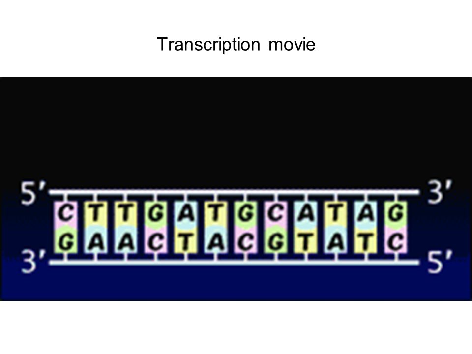 Transcription movie