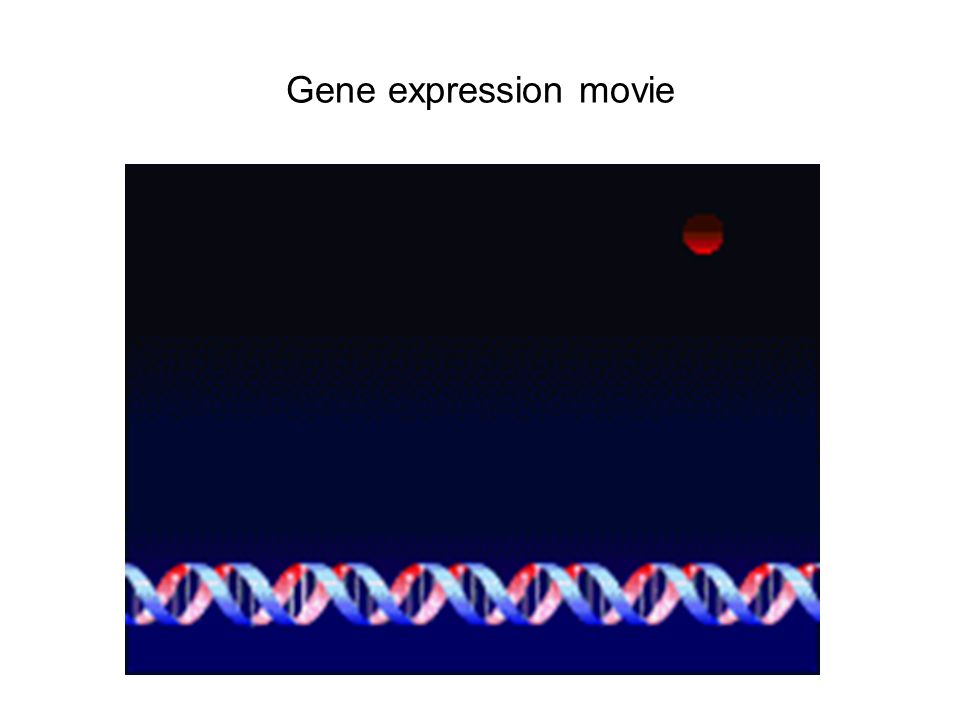 Gene expression movie