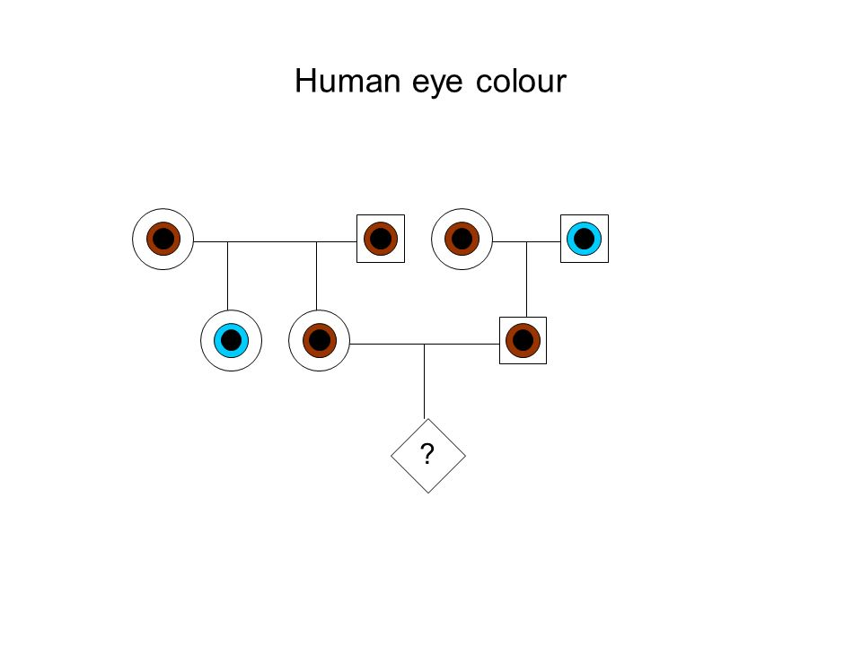 Human eye colour ?