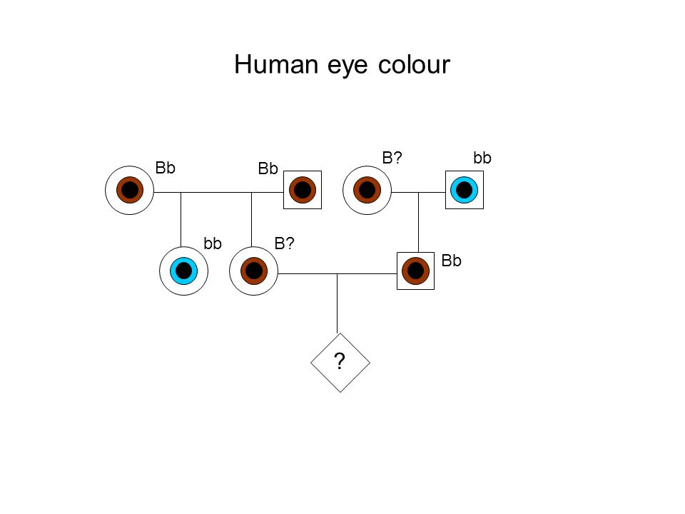Human eye colour ? Bb B?bb B?