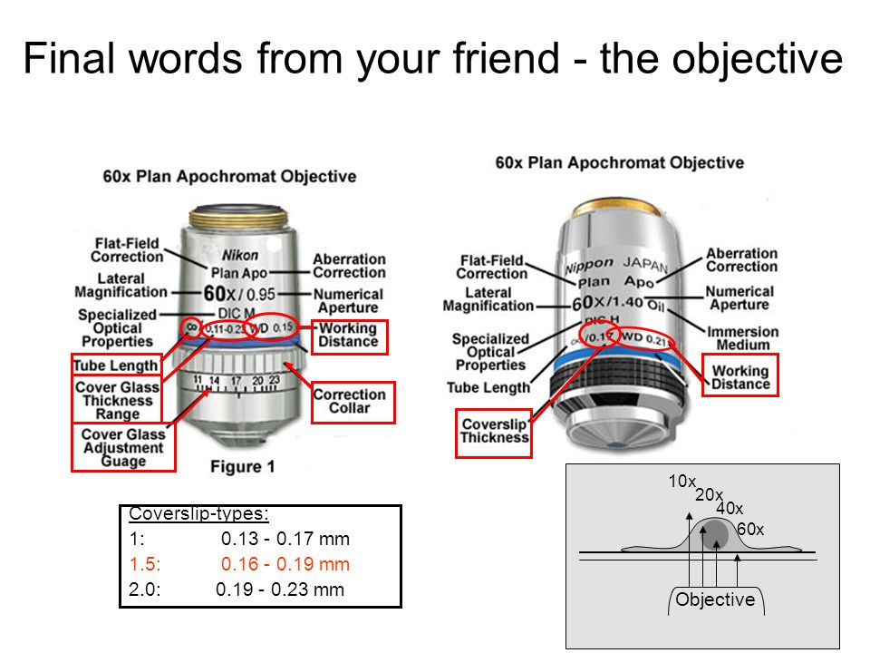 Final words from your friend - the objective Coverslip-types: 1: 0.13 - 0.17 mm 1.5: 0.16 - 0.19 mm 2.0:0.19 - 0.23 mm Objective 10x 20x 40x 60x