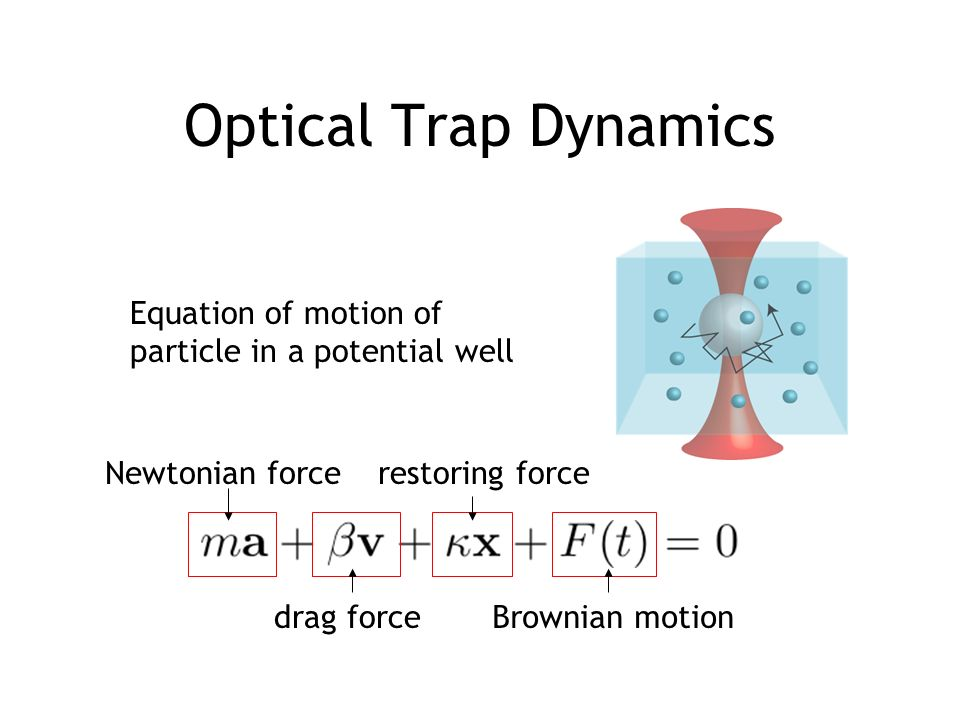 Optical Trap Dynamics Equation of motion of particle in a potential well restoring force Brownian motion Newtonian force drag force