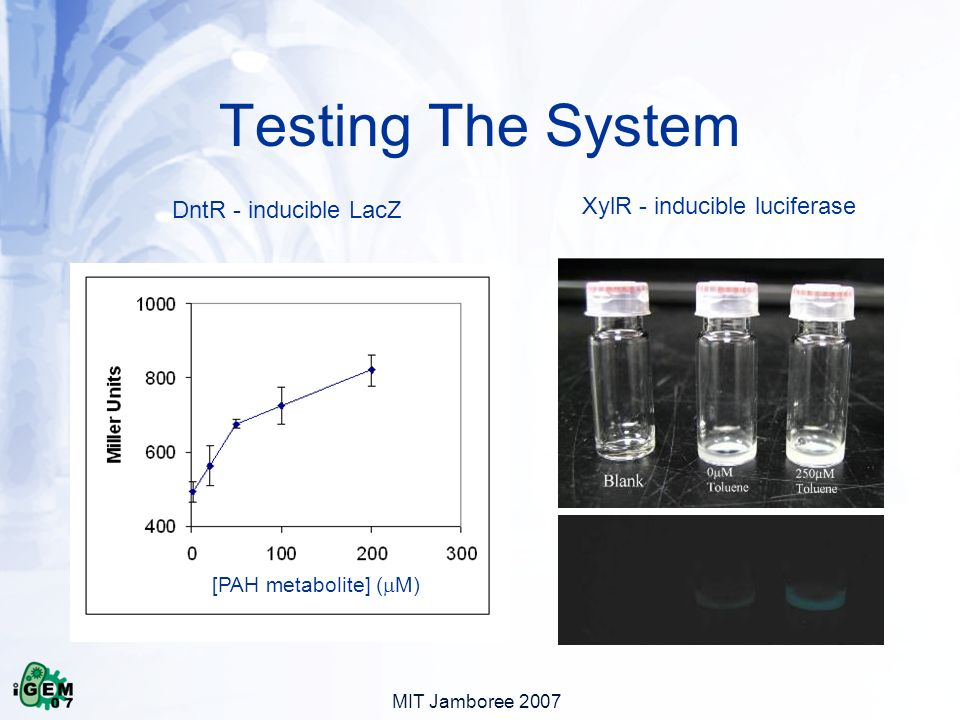 MIT Jamboree 2007 Testing The System XylR - inducible luciferase DntR - inducible LacZ [PAH metabolite] ( M)