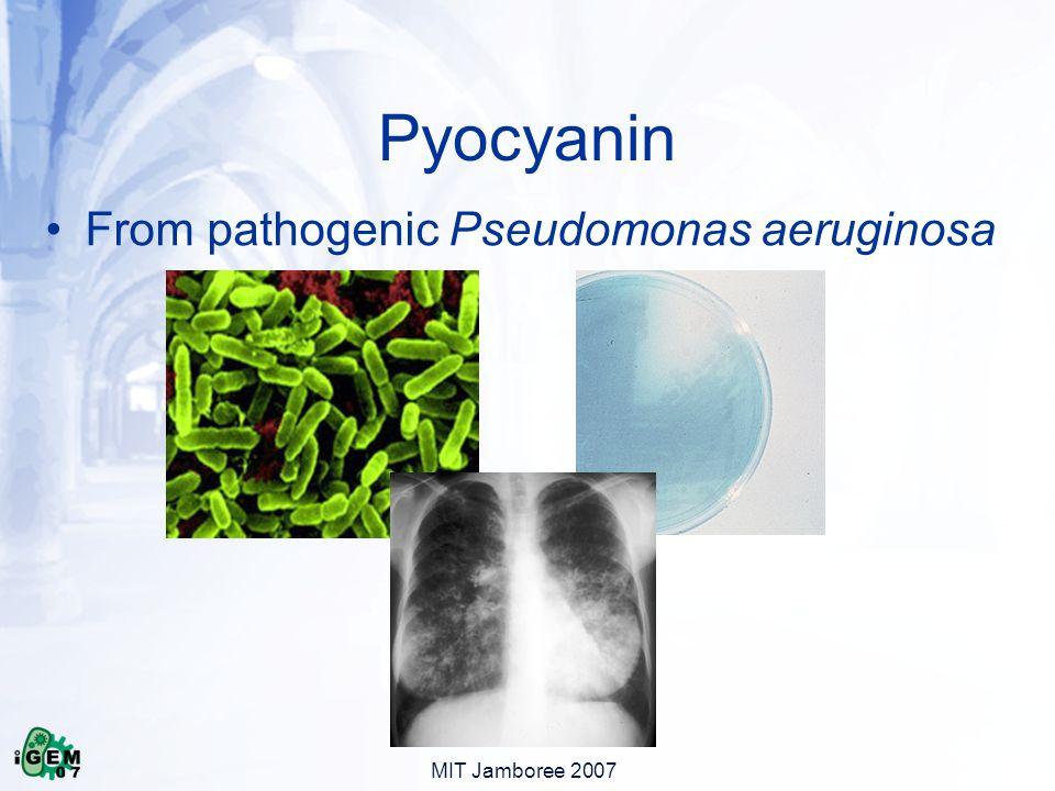 MIT Jamboree 2007 Pyocyanin From pathogenic Pseudomonas aeruginosa