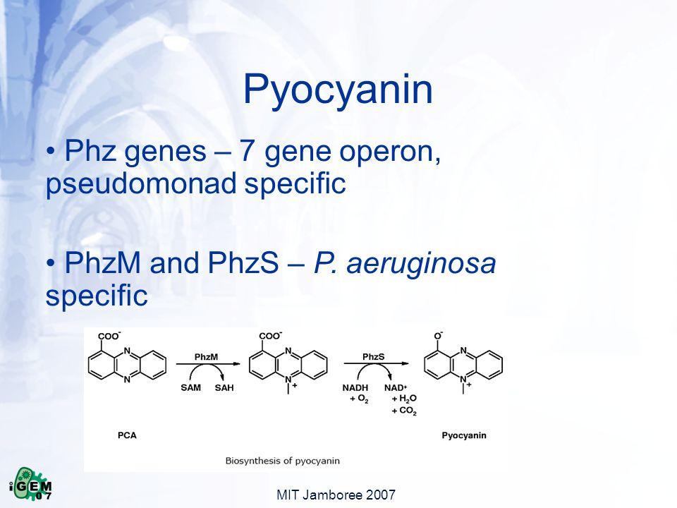MIT Jamboree 2007 Phz genes – 7 gene operon, pseudomonad specific PhzM and PhzS – P.