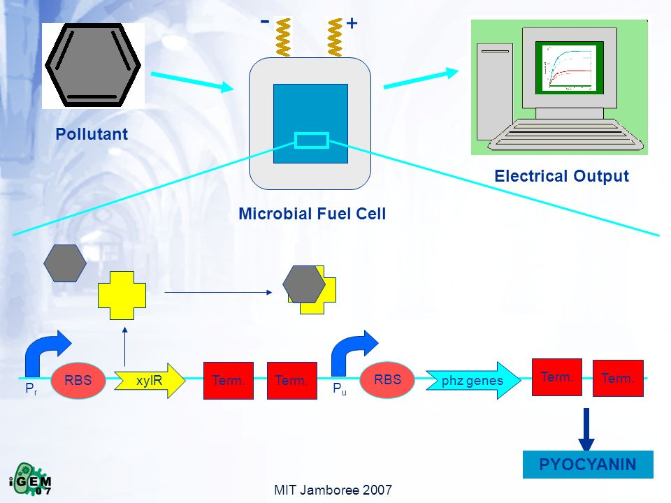 MIT Jamboree 2007 + - Pollutant Microbial Fuel Cell Electrical Output xylR RBS Term.