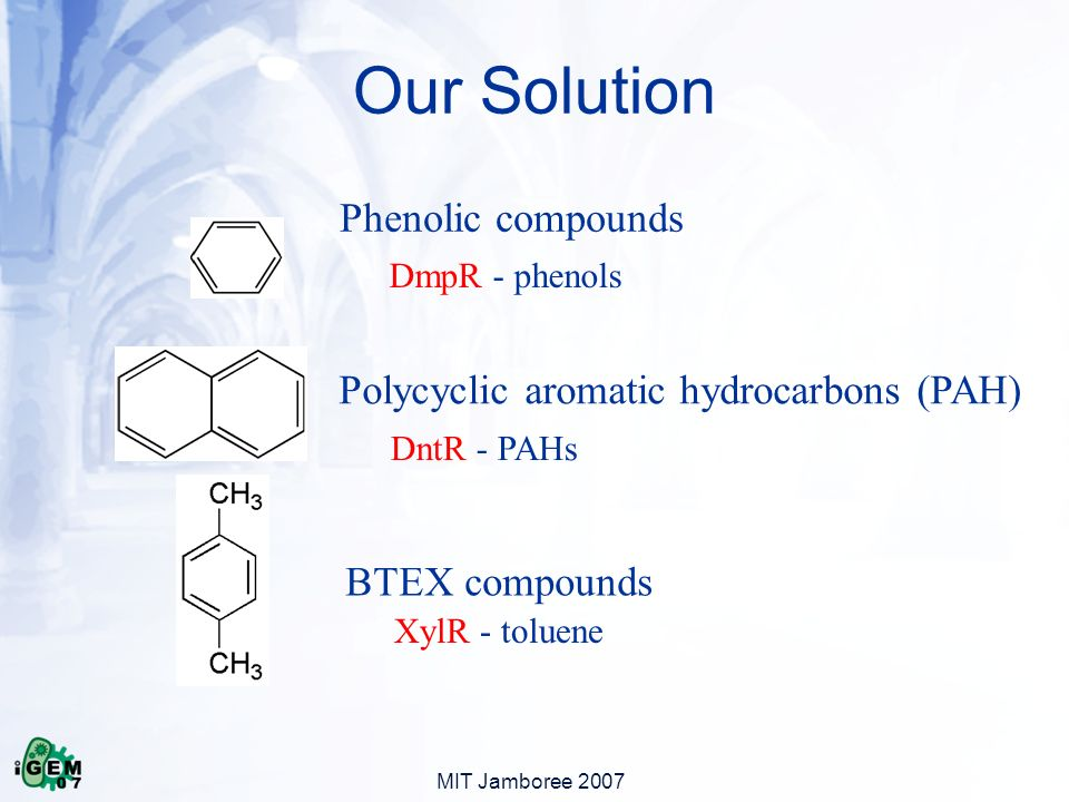 MIT Jamboree 2007 Phenolic compounds Polycyclic aromatic hydrocarbons (PAH) BTEX compounds Our Solution DmpR - phenols DntR - PAHs XylR - toluene