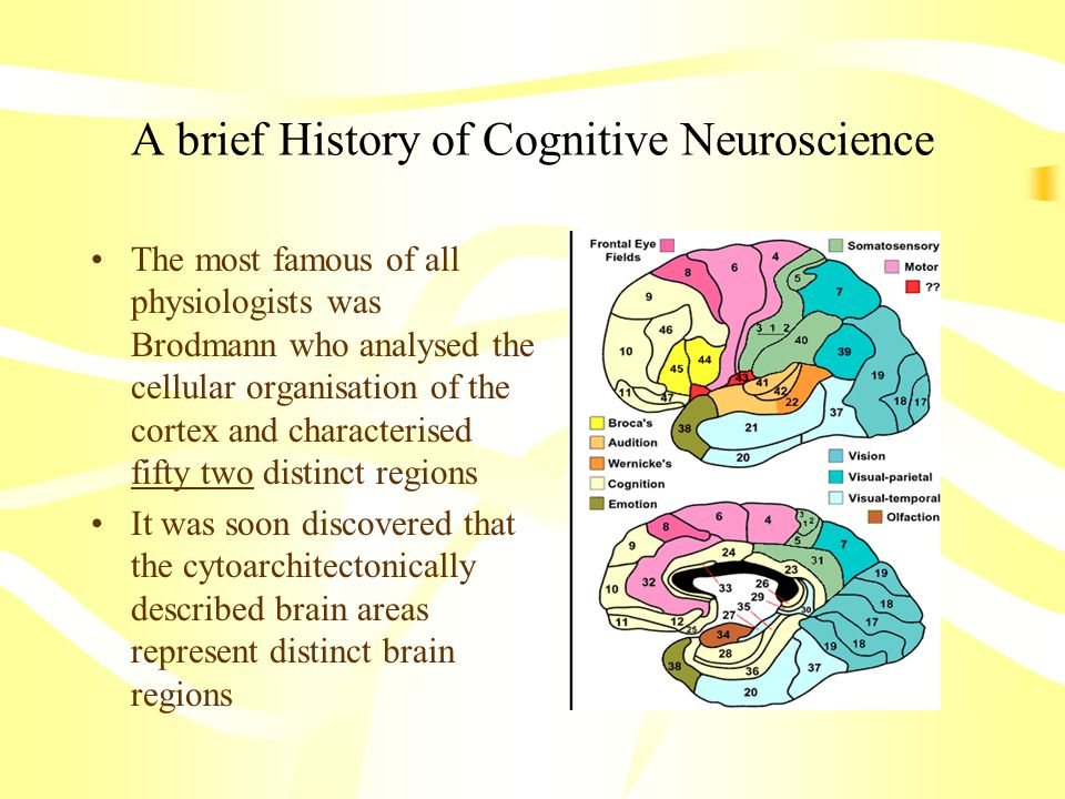 A brief History of Cognitive Neuroscience The most famous of all physiologists was Brodmann who analysed the cellular organisation of the cortex and c