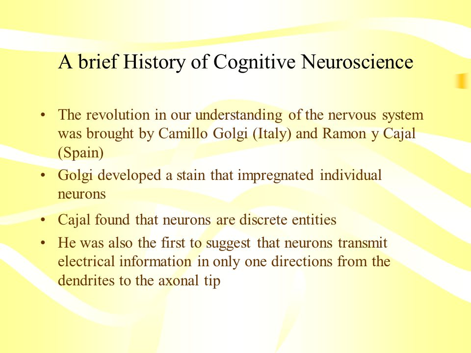 A brief History of Cognitive Neuroscience The revolution in our understanding of the nervous system was brought by Camillo Golgi (Italy) and Ramon y C