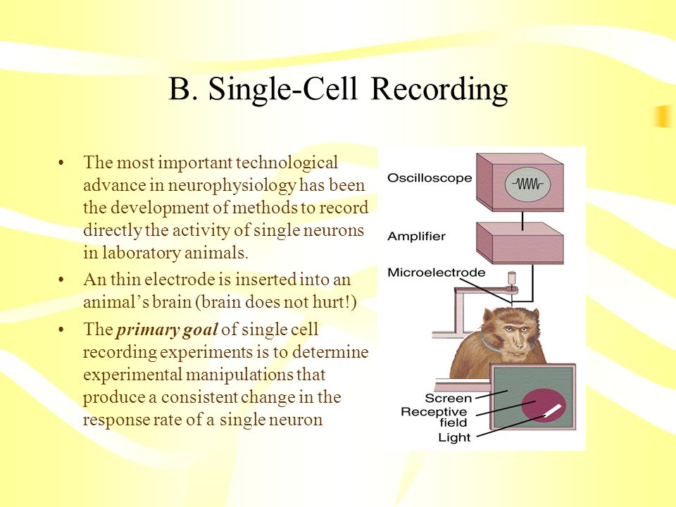 B. Single-Cell Recording The most important technological advance in neurophysiology has been the development of methods to record directly the activi