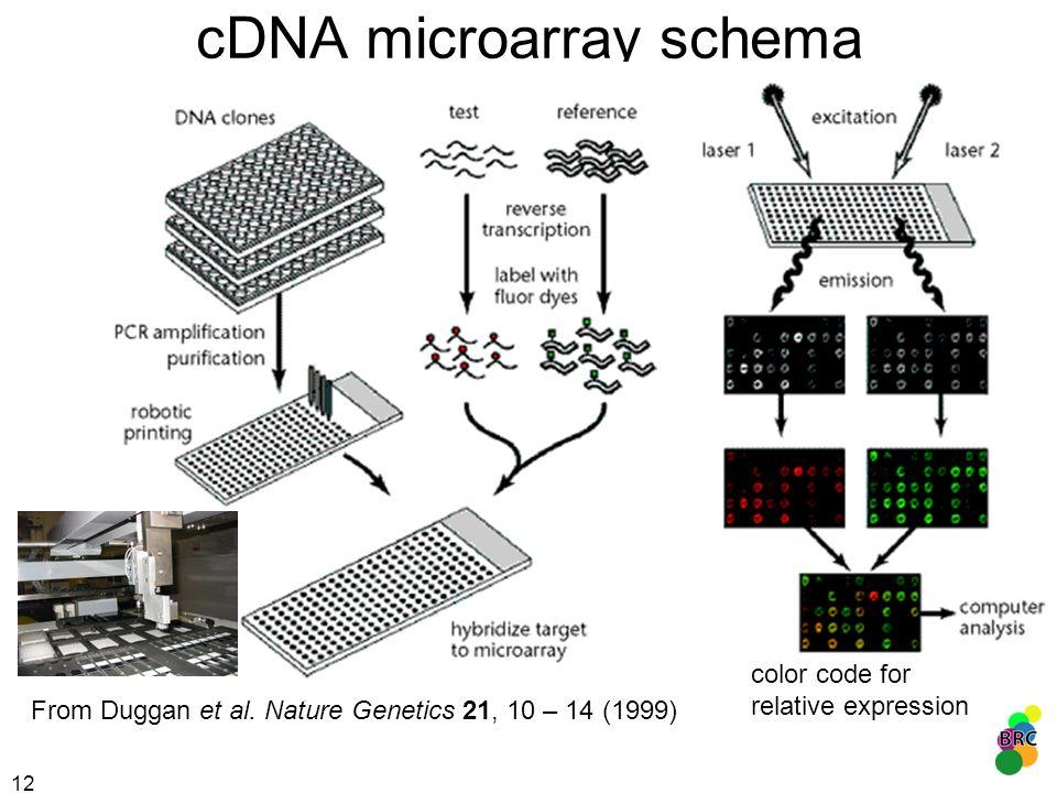12 cDNA microarray schema From Duggan et al. Nature Genetics 21, 10 – 14 (1999) color code for relative expression