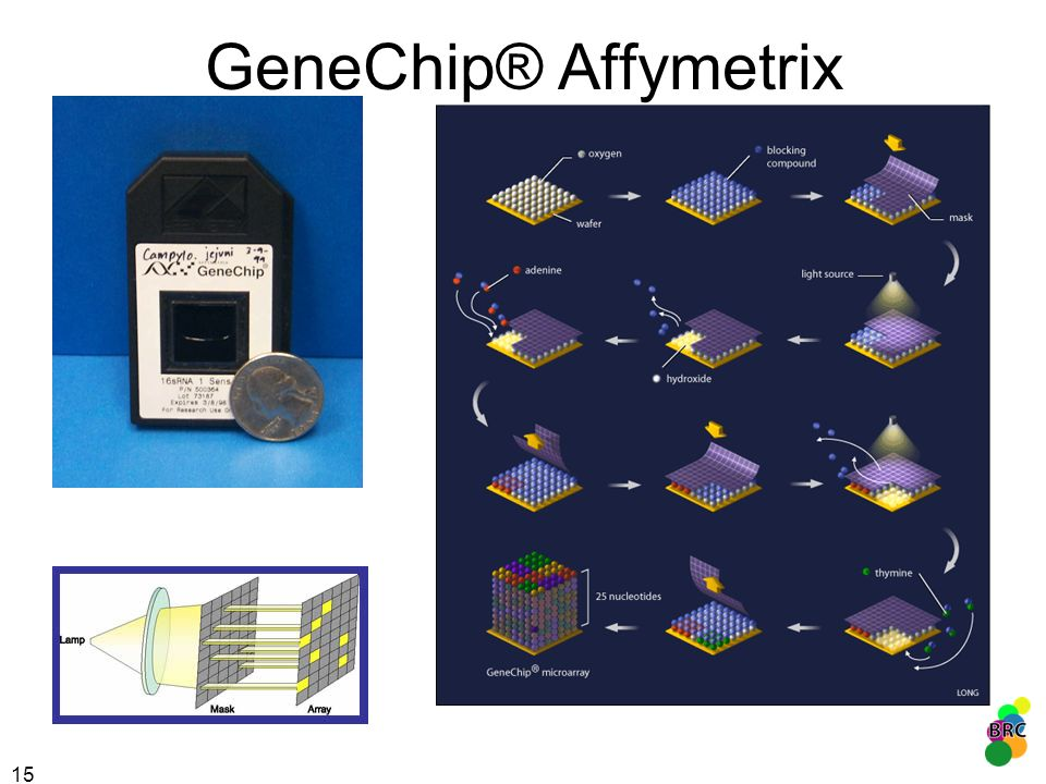 15 GeneChip® Affymetrix