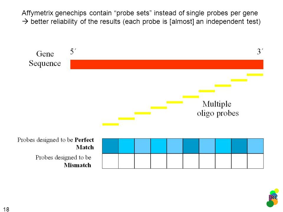 18 Affymetrix genechips contain probe sets instead of single probes per gene better reliability of the results (each probe is [almost] an independent