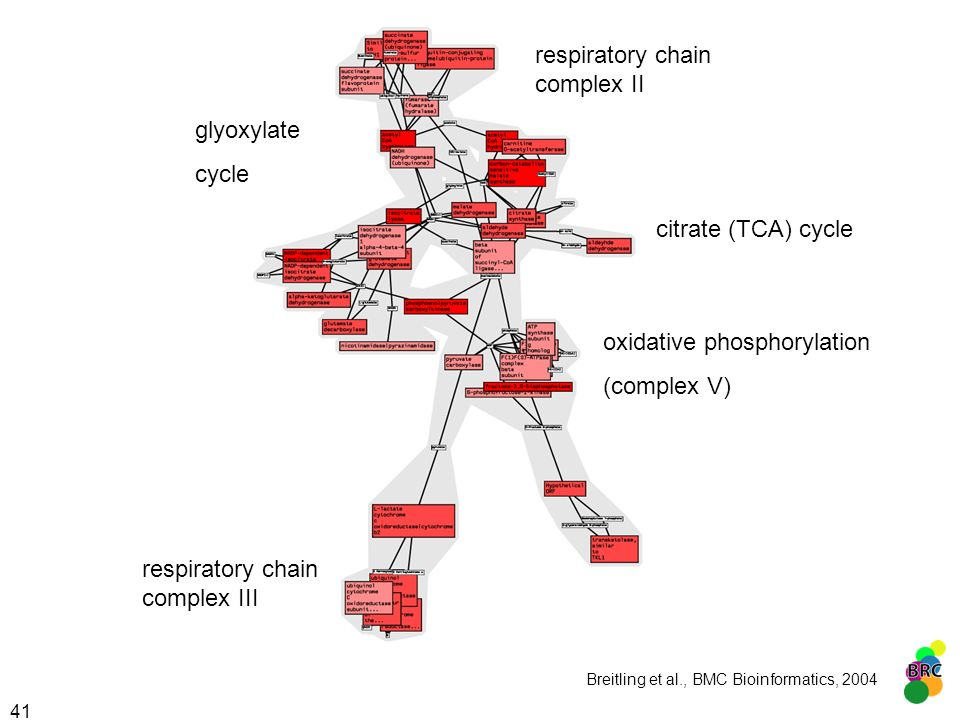 41 glyoxylate cycle citrate (TCA) cycle oxidative phosphorylation (complex V) respiratory chain complex III respiratory chain complex II Breitling et