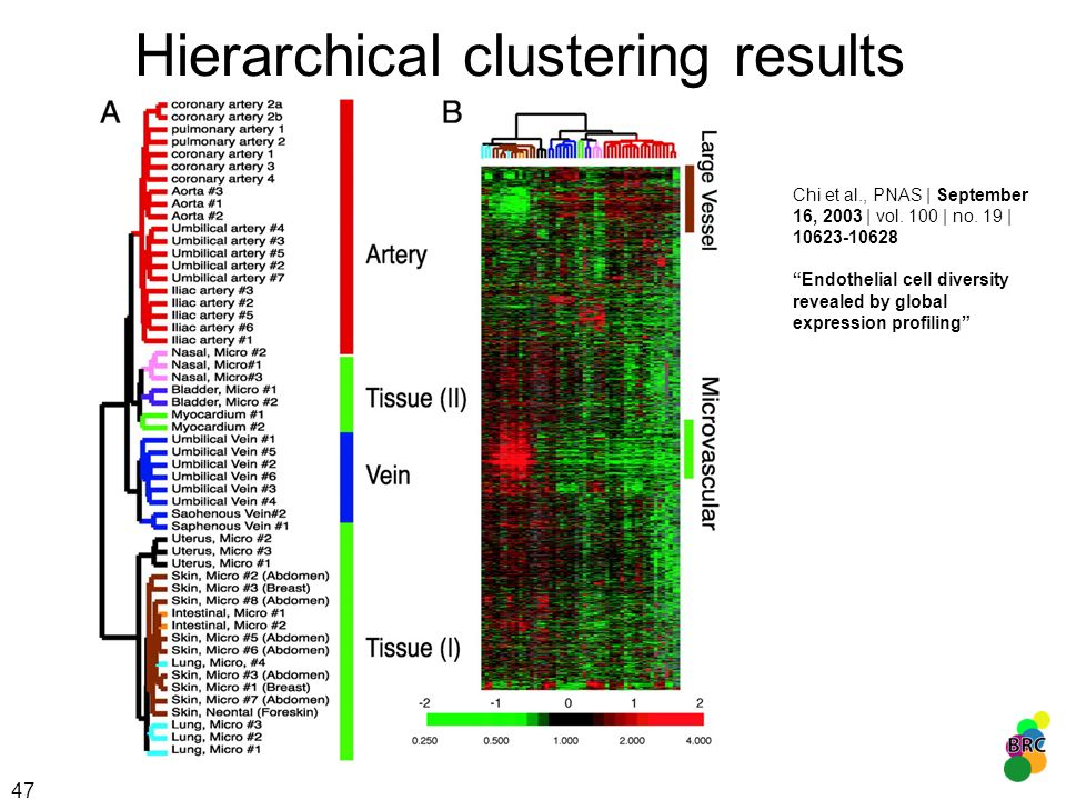 47 Hierarchical clustering results Chi et al., PNAS | September 16, 2003 | vol. 100 | no. 19 | 10623-10628 Endothelial cell diversity revealed by glob