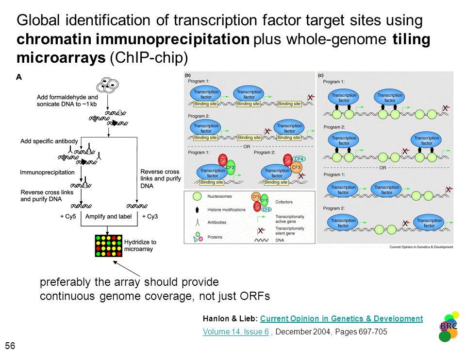 56 Global identification of transcription factor target sites using chromatin immunoprecipitation plus whole-genome tiling microarrays (ChIP-chip) pre
