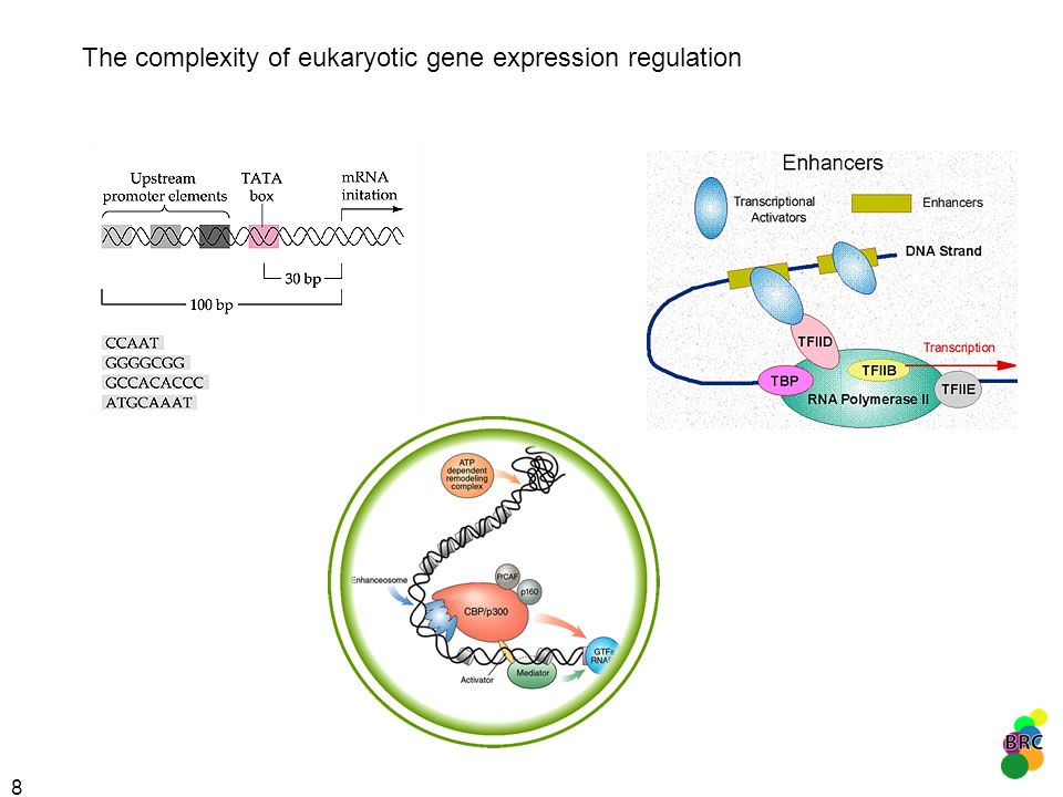 8 The complexity of eukaryotic gene expression regulation