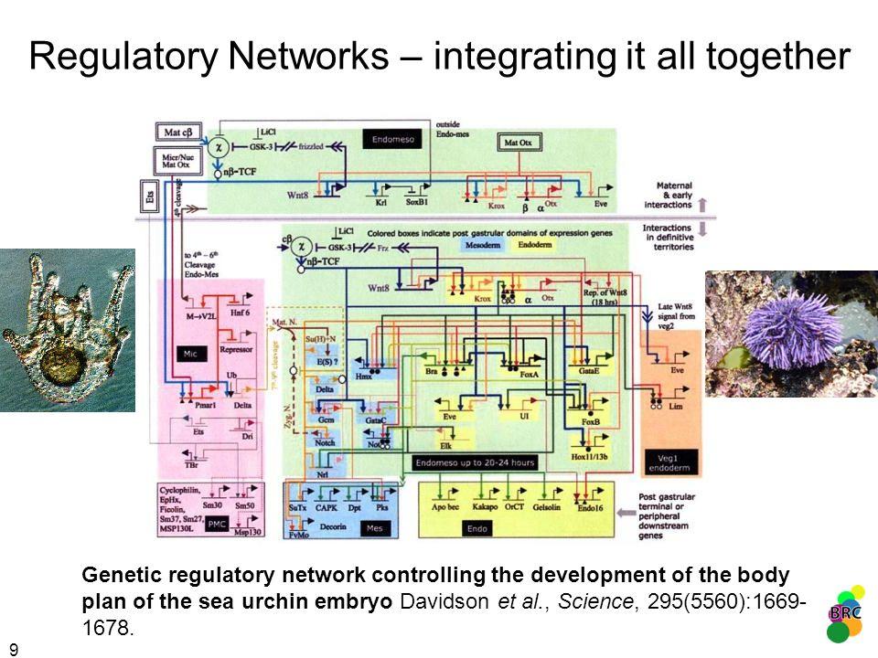 40 small ribosomal subunit large ribosomal subunit nucleolar rRNA processing translational elongation Breitling et al., BMC Bioinformatics, 2004