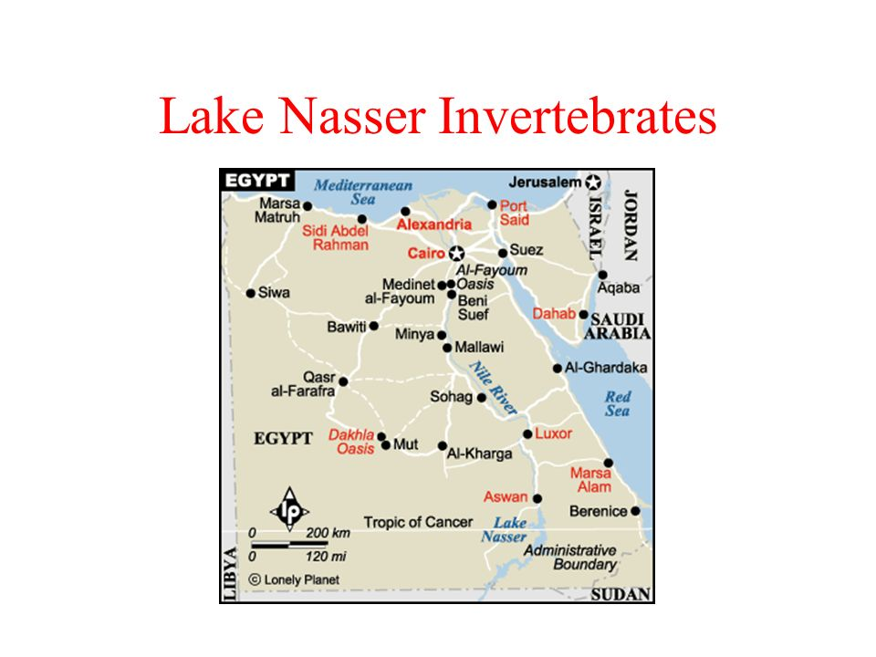 Lake Nasser Invertebrates