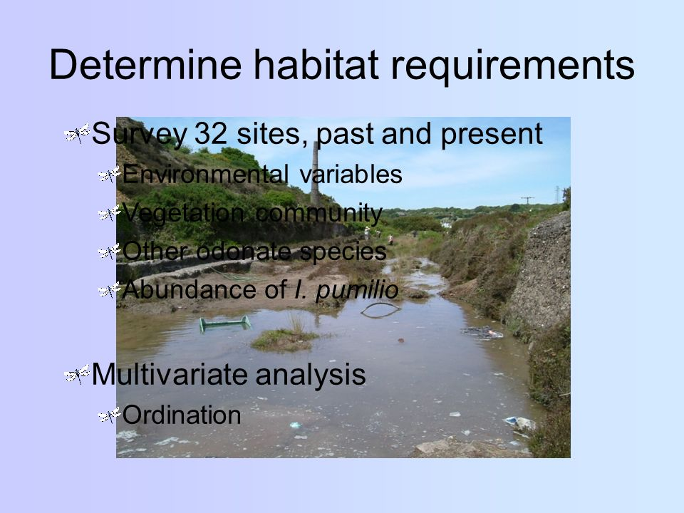 Determine habitat requirements Survey 32 sites, past and present Environmental variables Vegetation community Other odonate species Abundance of I. pu