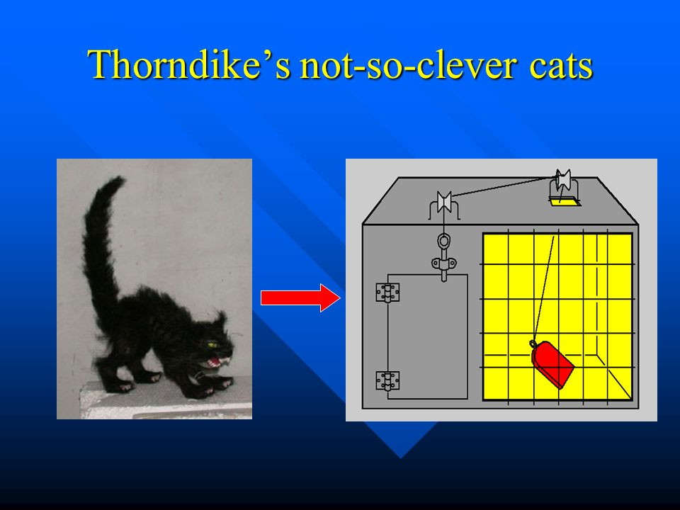 Thorndikes not-so-clever cats