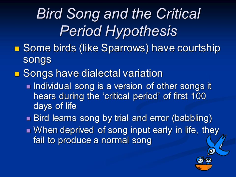 Bird Song and the Critical Period Hypothesis Some birds (like Sparrows) have courtship songs Some birds (like Sparrows) have courtship songs Songs hav