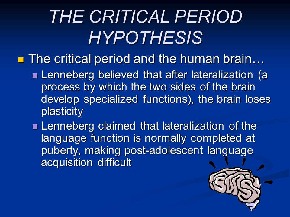 THE CRITICAL PERIOD HYPOTHESIS The critical period and the human brain… The critical period and the human brain… Lenneberg believed that after lateral