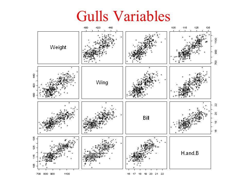 Gulls Variables