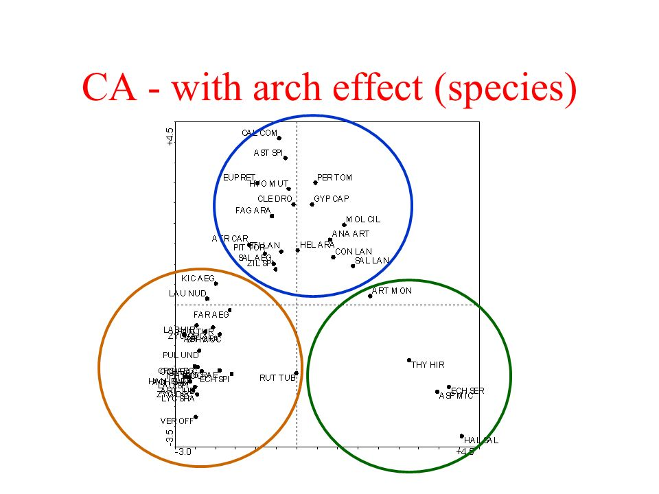 CA - with arch effect (species)