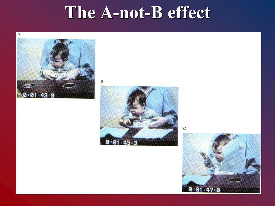 The A-not-B effect