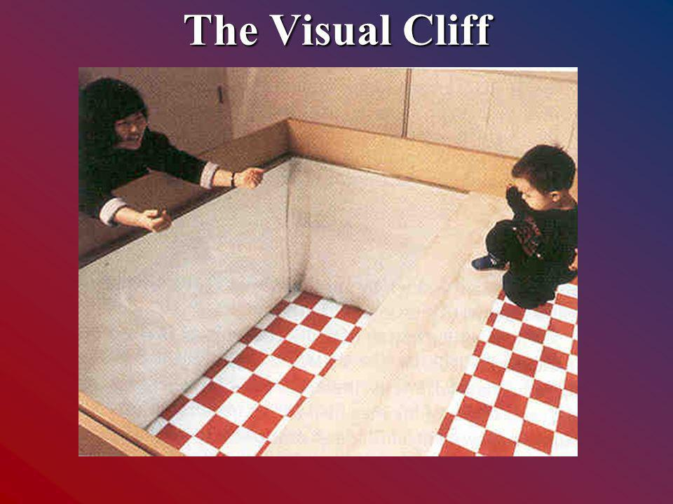 The Visual Cliff