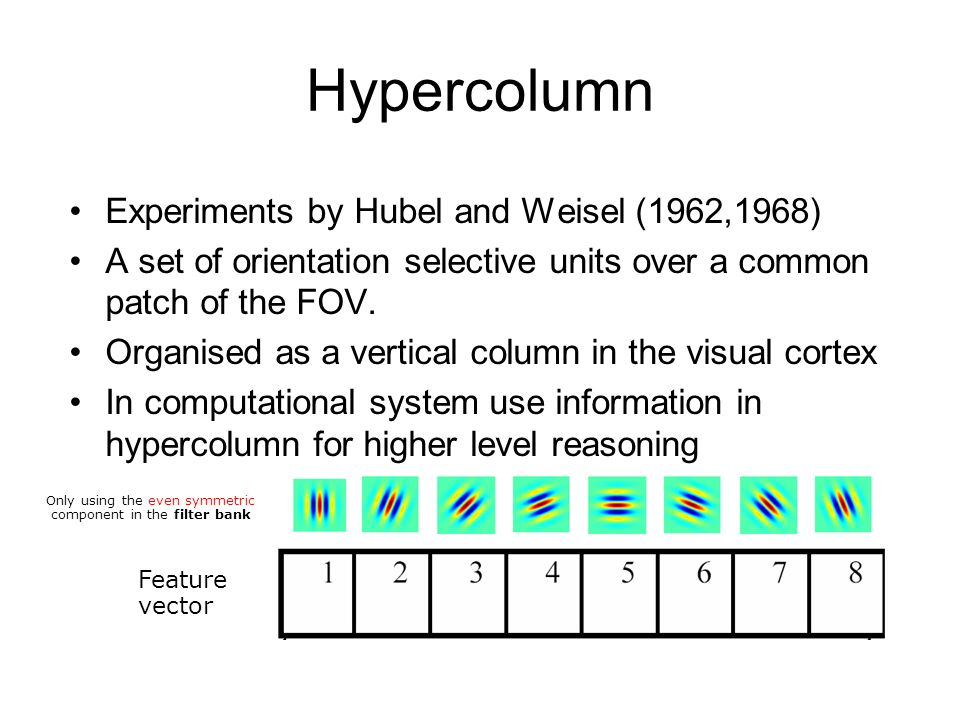 Hypercolumn Experiments by Hubel and Weisel (1962,1968) A set of orientation selective units over a common patch of the FOV.