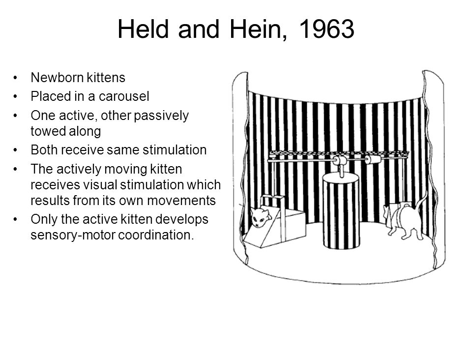 Newborn kittens Placed in a carousel One active, other passively towed along Both receive same stimulation The actively moving kitten receives visual