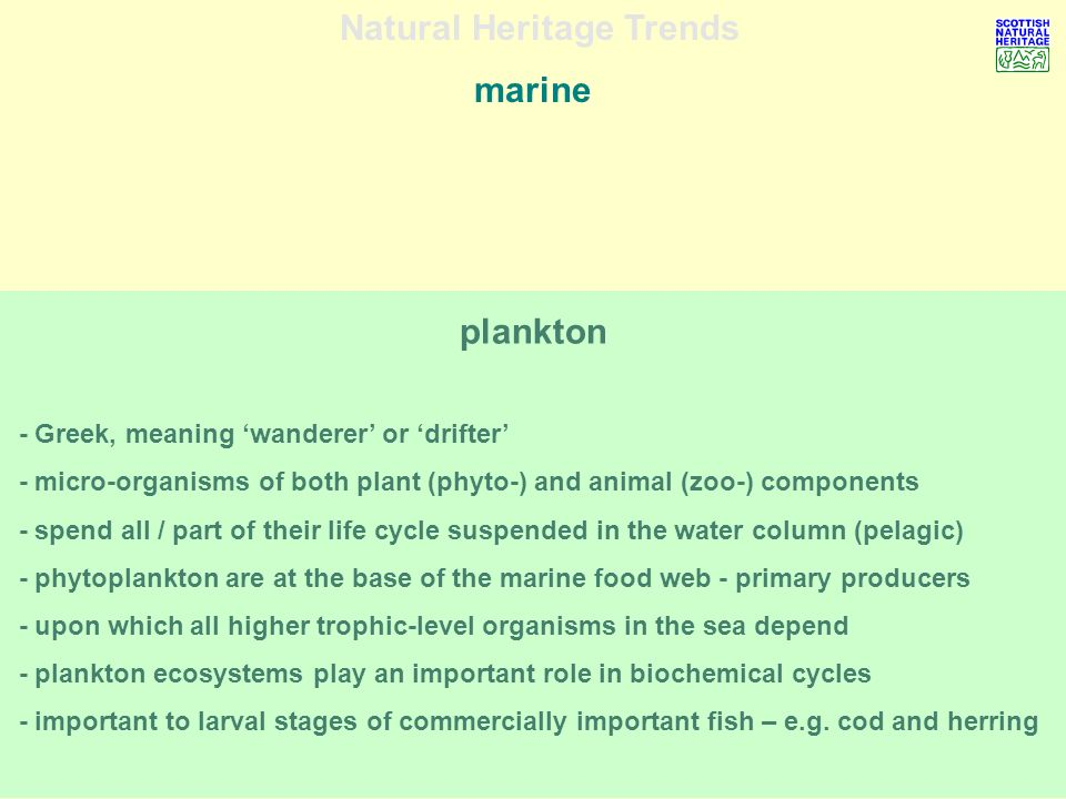 Natural Heritage Trends marine plankton - Greek, meaning wanderer or drifter - micro-organisms of both plant (phyto-) and animal (zoo-) components - spend all / part of their life cycle suspended in the water column (pelagic) - phytoplankton are at the base of the marine food web - primary producers - upon which all higher trophic-level organisms in the sea depend - plankton ecosystems play an important role in biochemical cycles - important to larval stages of commercially important fish – e.g.