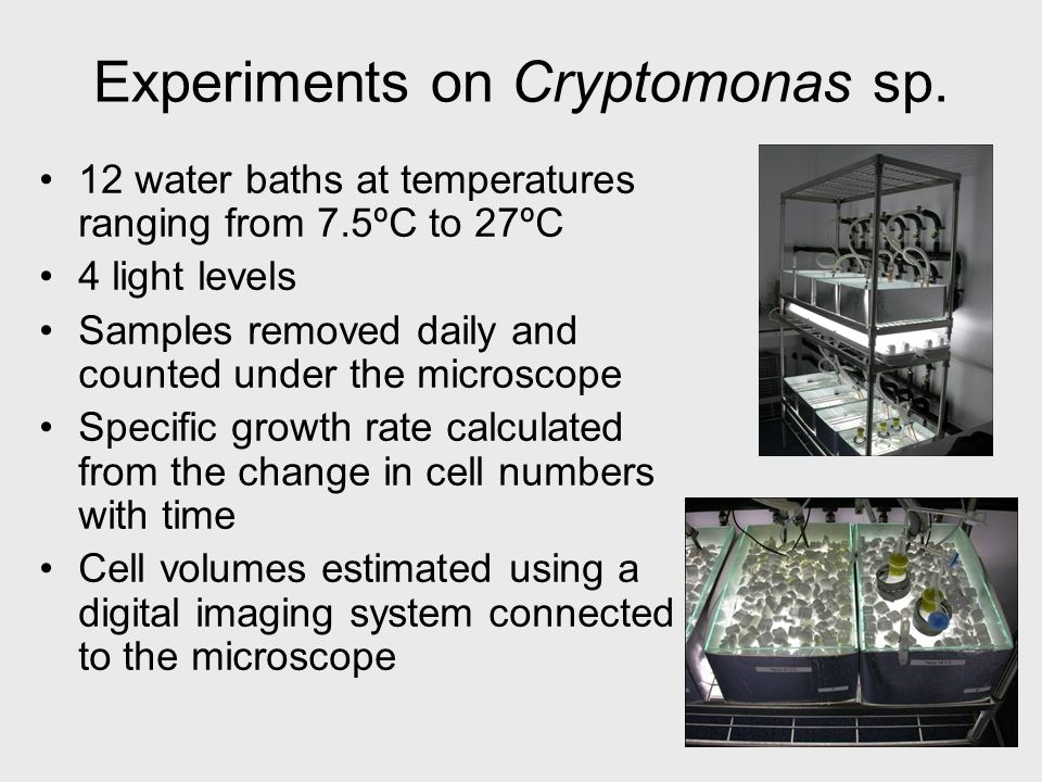 Experiments on Cryptomonas sp. 12 water baths at temperatures ranging from 7.5ºC to 27ºC 4 light levels Samples removed daily and counted under the mi