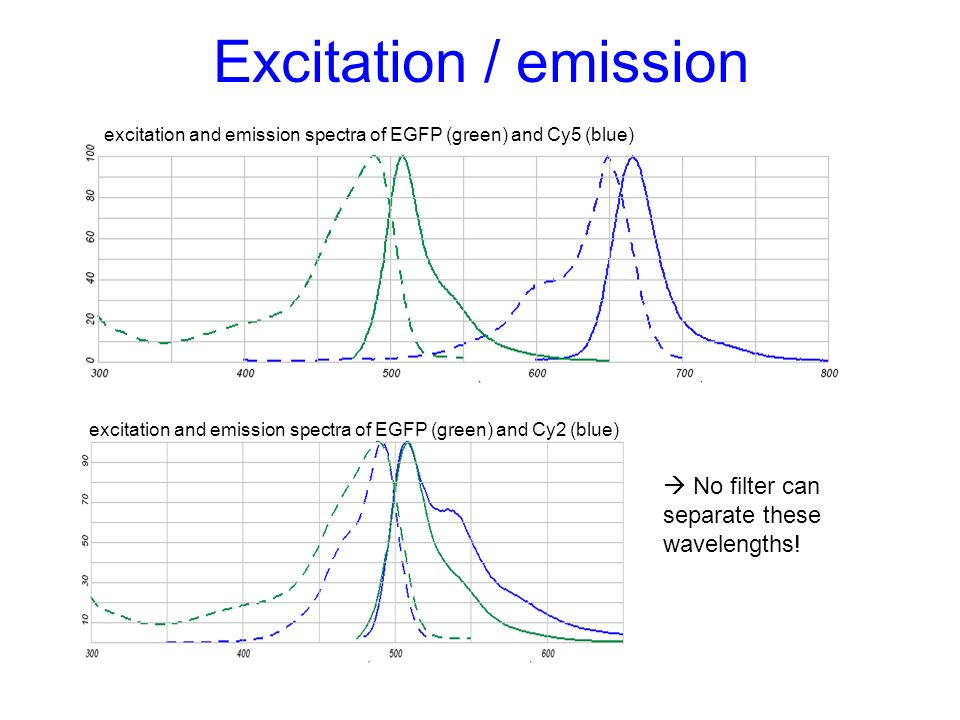 Excitation / emission excitation and emission spectra of EGFP (green) and Cy5 (blue) excitation and emission spectra of EGFP (green) and Cy2 (blue) No
